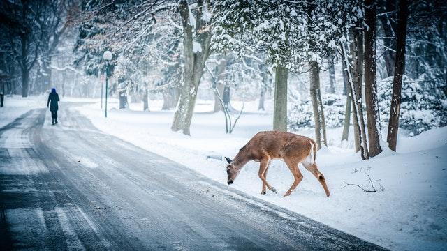 Zver na ceste